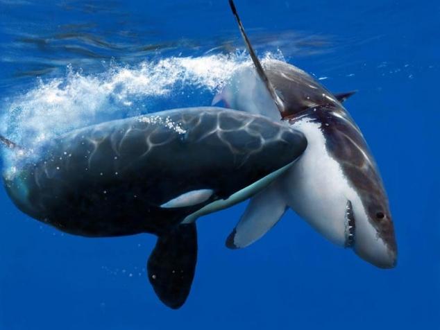 скачать акулы торрент - фото 11