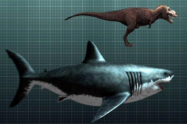 акулы мегалодон фото