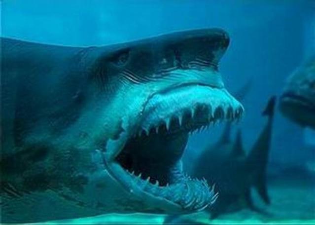скачать акулы торрент