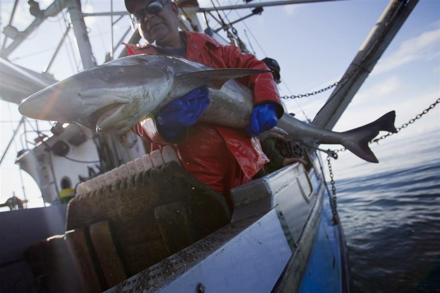 фильм ловля акул