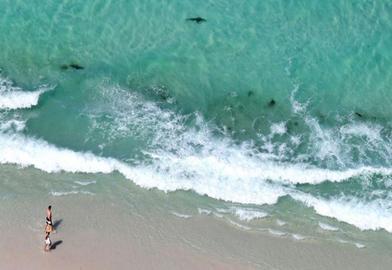 Пляж и акулы 50