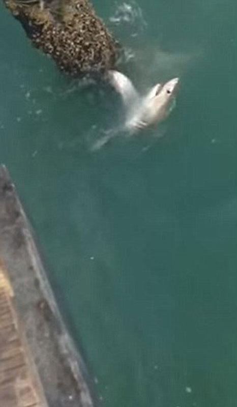 видео о акуле как рыбаки ее поймали