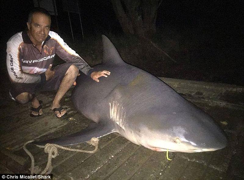Мы просто онемели В Австралии рыбаки поймали беременную тупорылую акулу