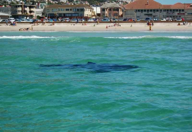 Пляж и акулы 8