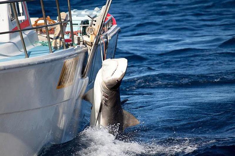 рыбаки в австралии