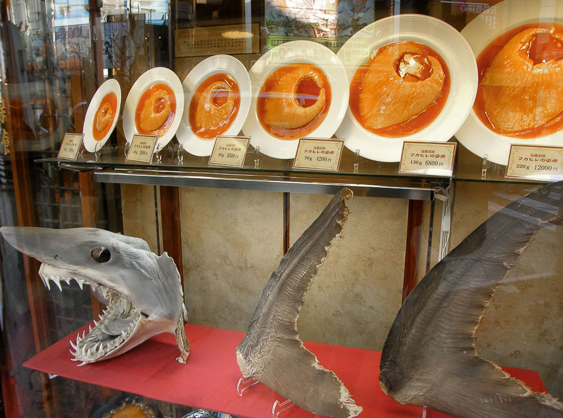 shark finning essay This article talks about how shark finning has effected the population of sharks, and how their extinction will effect us and our worldshark finning zack reiter shark finning is the process in.