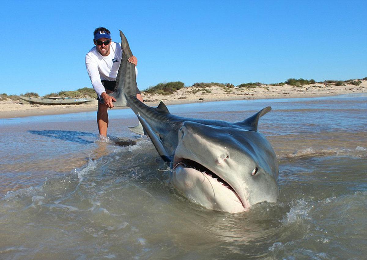 Пляж и акулы 32