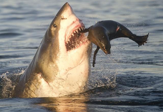 Секс акулы