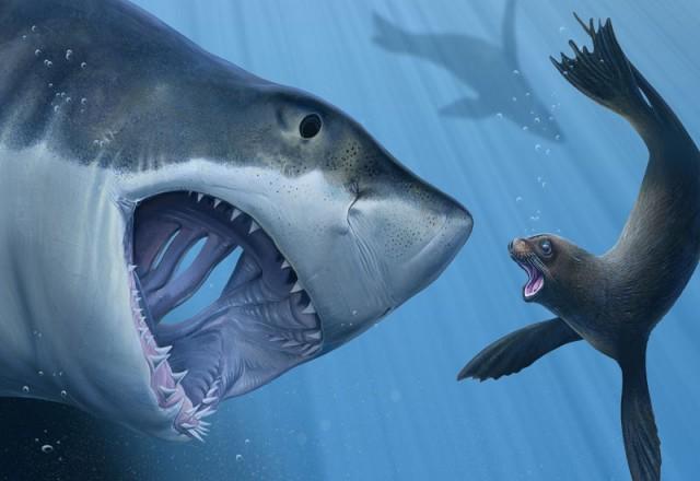 Игры Охота На Акул
