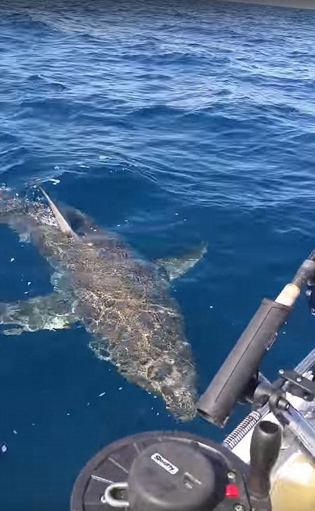 нападение белых акул на лодки