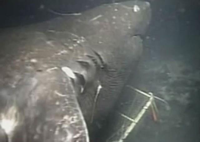 Акула мегалодон видео фото 128-319