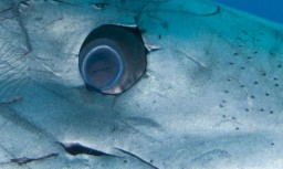 Глаз белой акулы кархародон фото