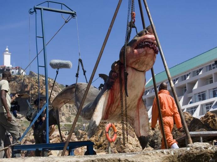 Рыбаки поймали Мегалодона фото