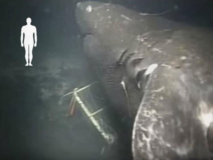 Мегалодон в Марианской впадине фото