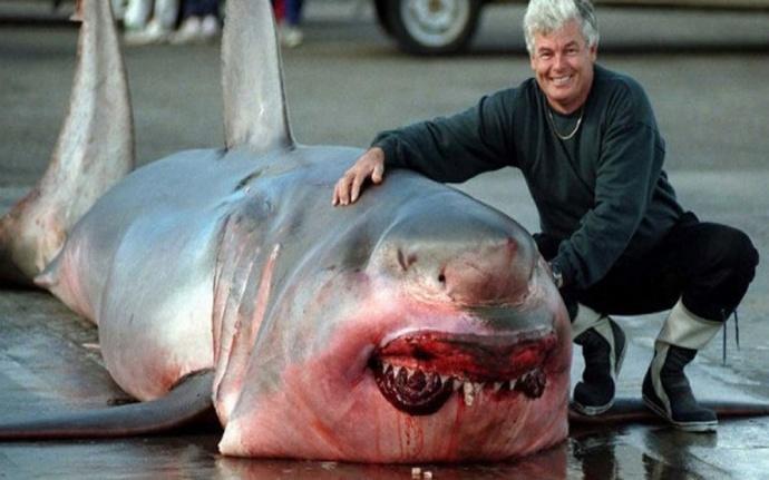 Рыбак поймал огромную белую акулу фото