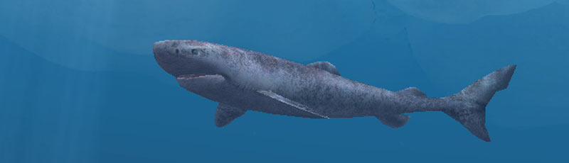 Факты про полярную акулу
