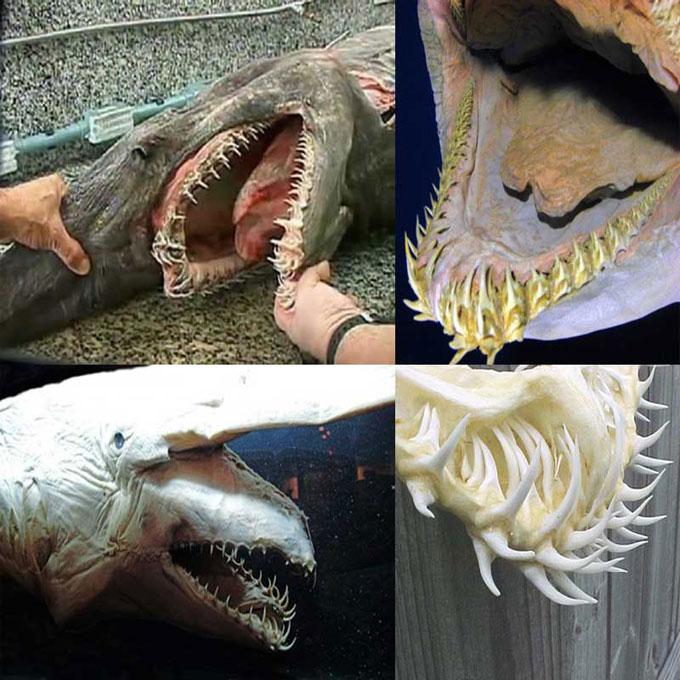 Акула-гоблин, челюсти домового