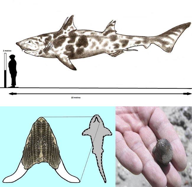 Птиходус - древняя акула Юрского периода
