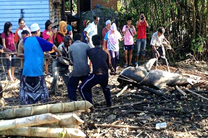 Нападение акул в Таиланде