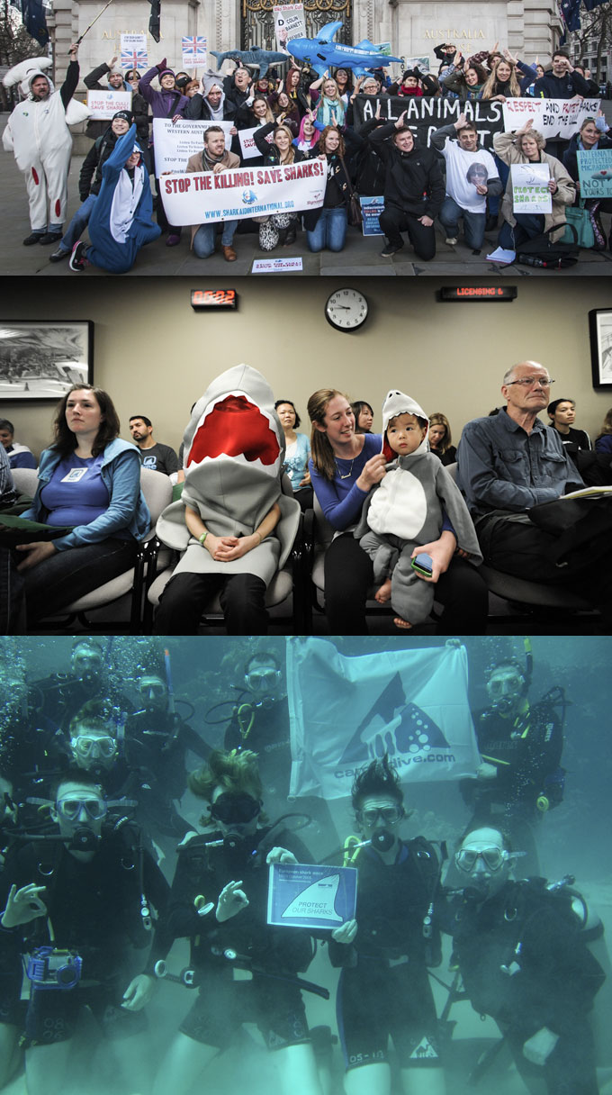 Развлекательные акции и мероприятия с акулами