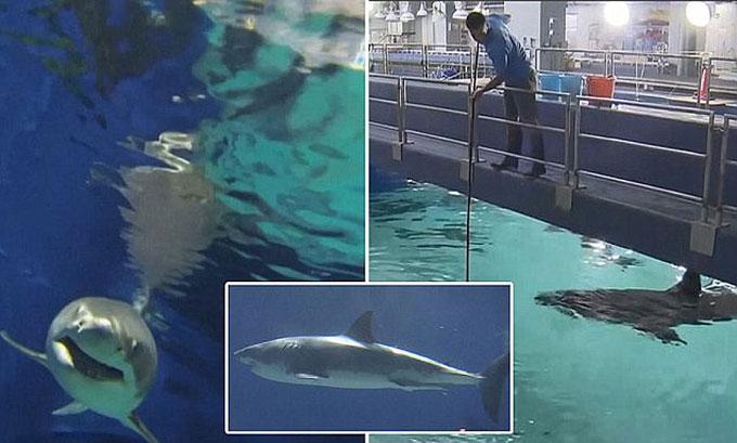 Кормление акул в аквариуме