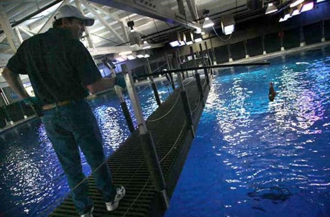 Кормление белой акулы в океанариуме