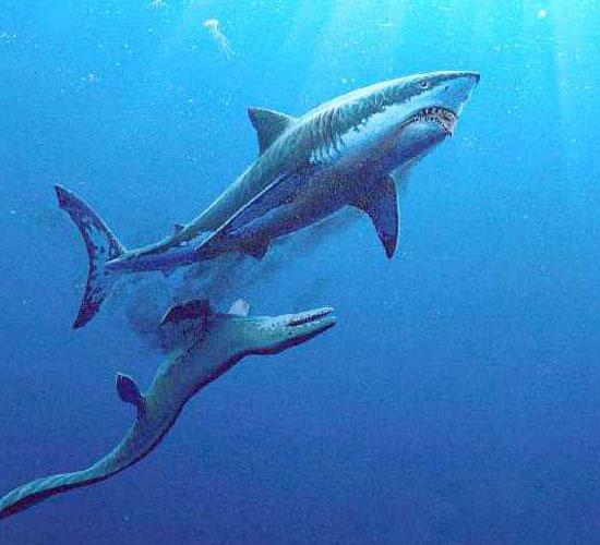 Фото: Ископаемая акула кретоксирина Cretoxyrhina - убийца динозавров