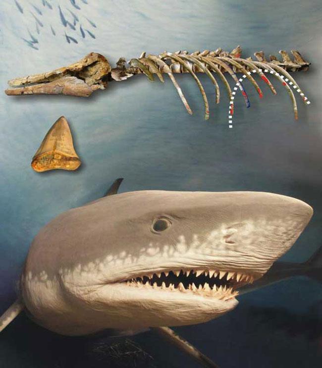 Древняя акула против дельфина