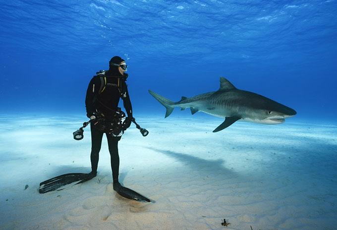 Фото: дайвинг с тигровой акулой