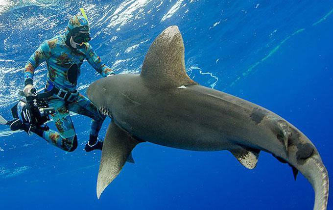 Фото: дайвер и акула