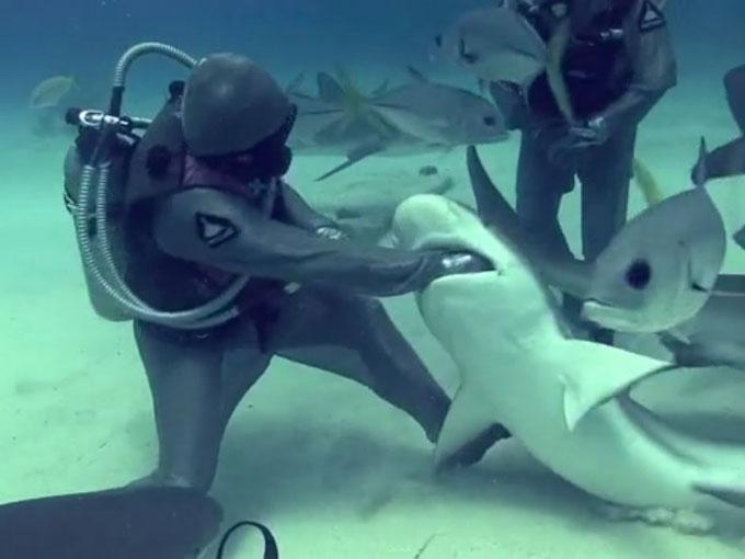 Фото: акула укусила дайвера