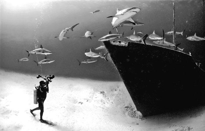 Фото: дайвер, акулы и затонувший корабль