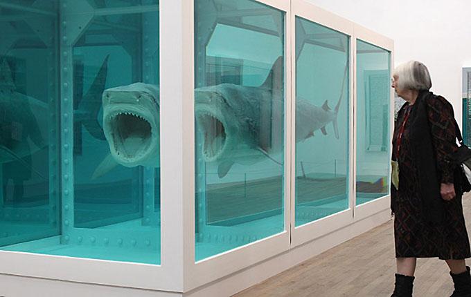 Экспонат - акула в формалине