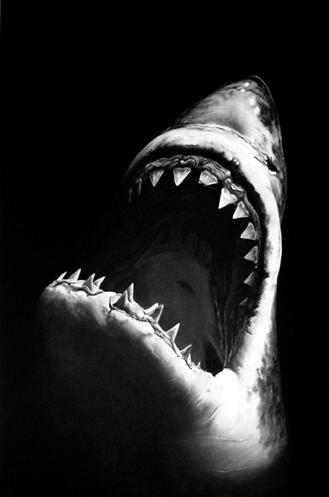 Изображение белой акулы угольным карандашом
