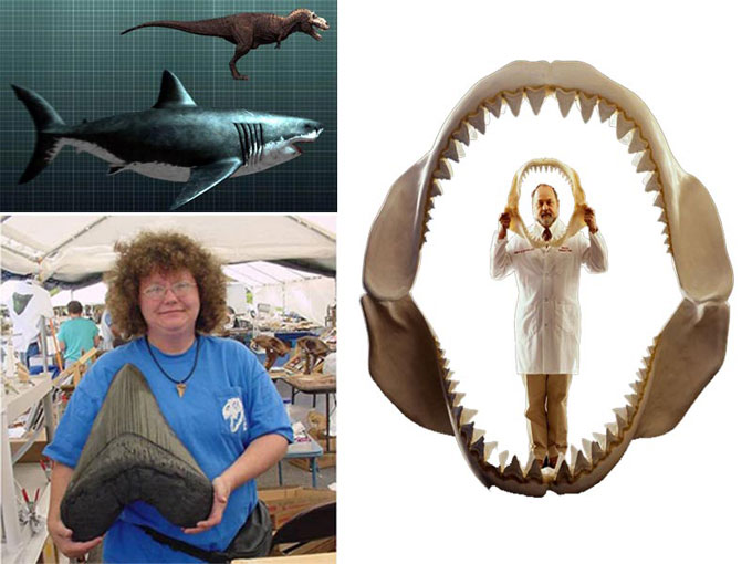Фотография гигантской акулы Мегалодон