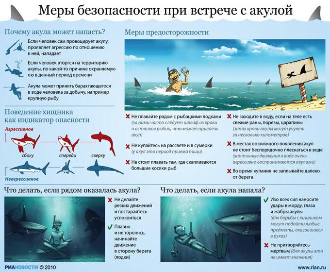 Памятка - поведение при встрече с акулой