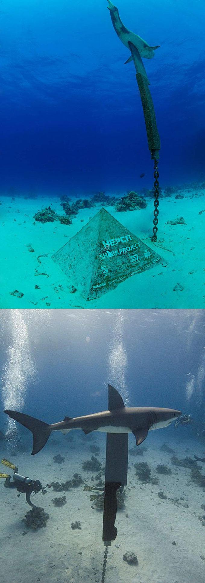 Подводный памятник - зарезанная акула с ножом в Египте