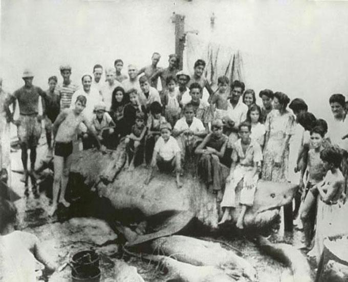 Самая большая пойманная белая акула в мире