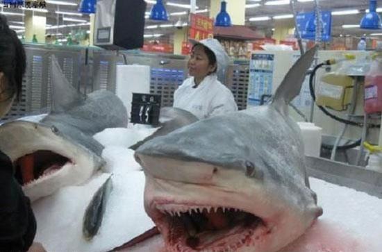 Свежемороженое мясо акулы в магазине
