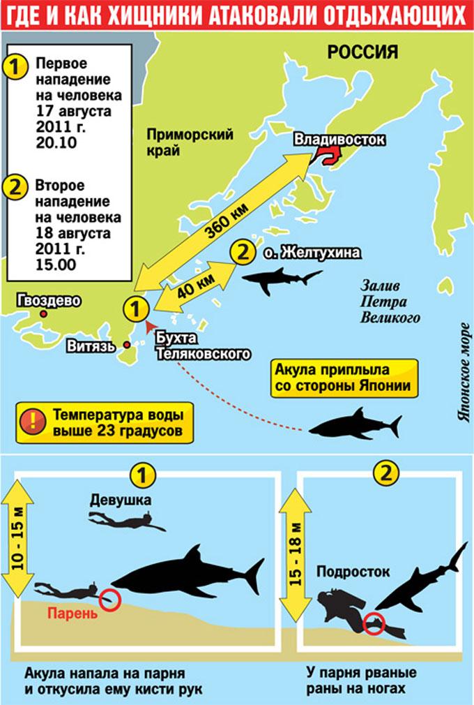 Фото схема нападений акул в Приморье