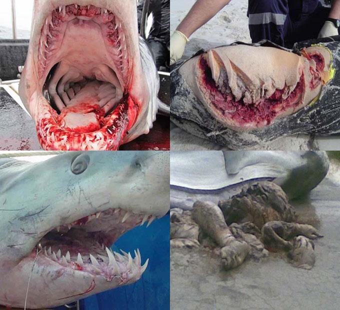 Почему акулы смертельно опасны?