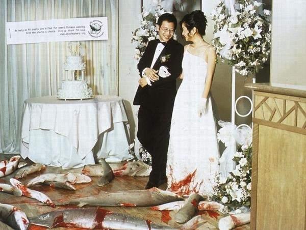 Социальная реклама WildAid - азиатская свадьба в Китае
