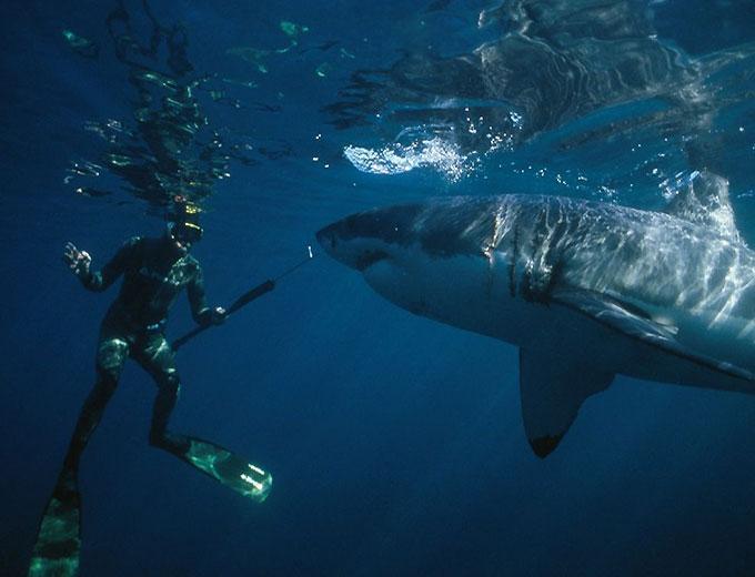 Фото: встреча с белой акулой