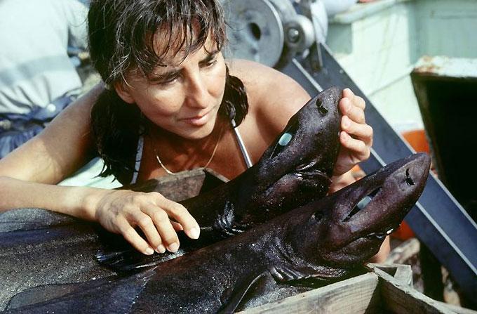Фото: Защита и спасение акул, разрушение мифов об акулах
