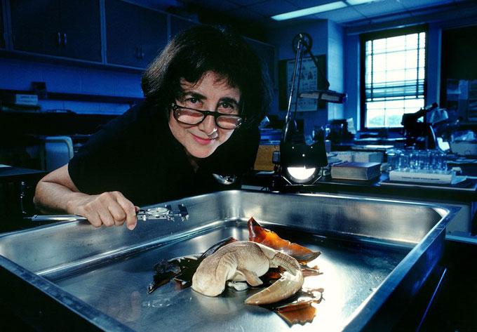 Фото: Биология и изучение акул