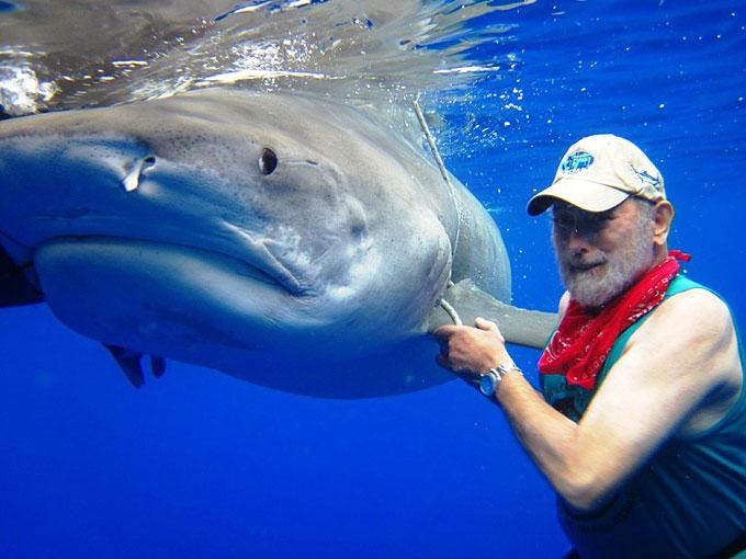 Фото: ученый плавает с тигровой акулой