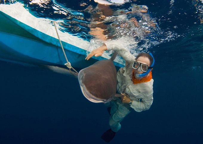 Фото: погружение к акулам