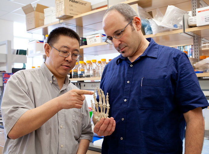 Биология: изучение генов конечностей