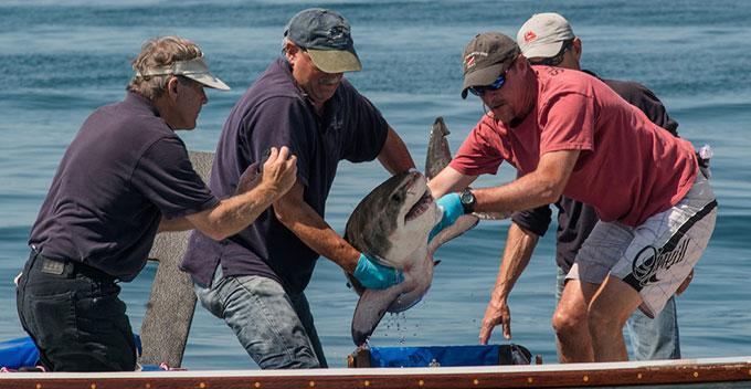 Фото: изучение акул