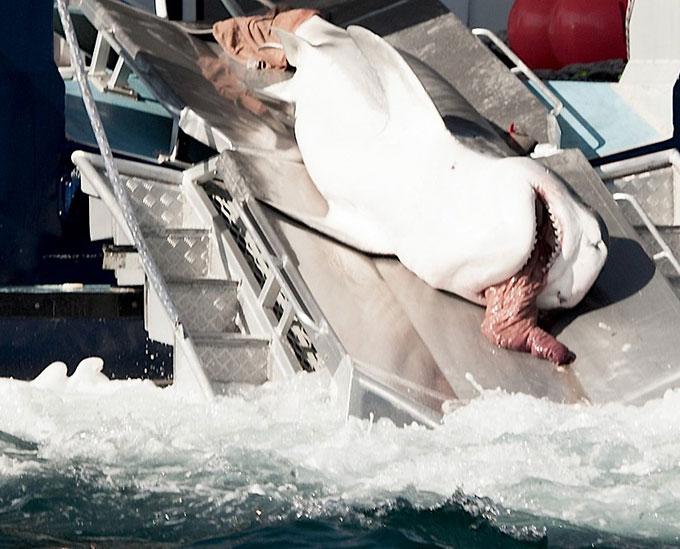 Фото: Акула выворачивает желудок наизнанку